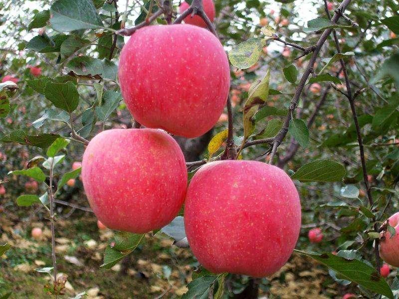 山东将开展特色农产品保险创新试点工作