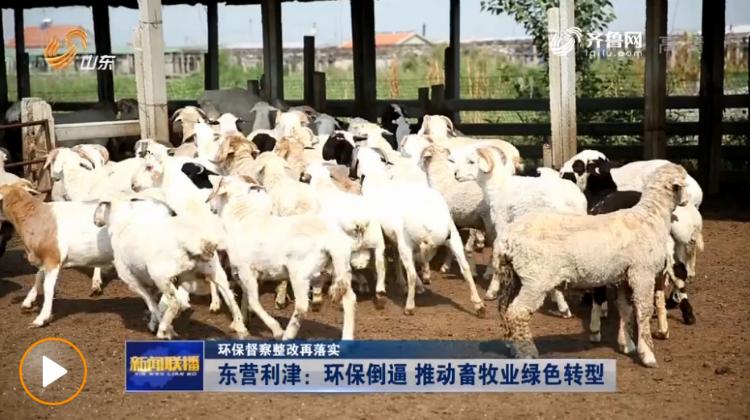 环保督察整改再落实丨东营利津环保倒逼 推动畜牧业绿色转型