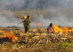桓台县域范围全年禁止露天焚烧秸秆 违者重则将被追究刑责