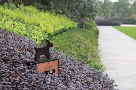 淄博:宠物厕所上线 文明遛狗新手段