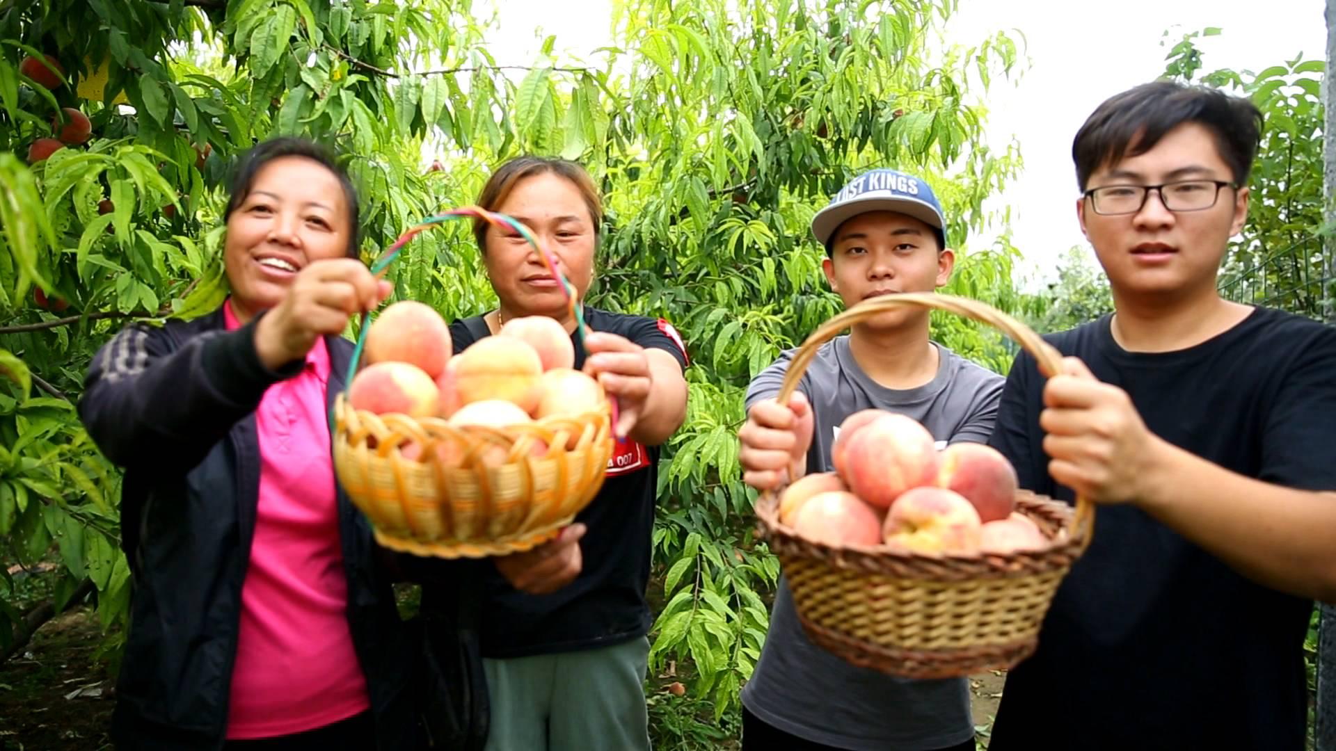 金秋画中话丨喜迎中国农民丰收节 齐鲁大地蜜桃熟了日子甜了