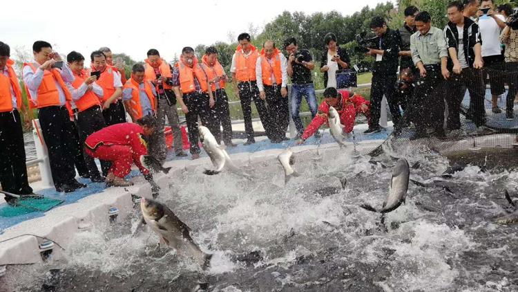 """68888元""""鱼王""""! 新泰青云湖有机鱼旅游文化艺术节夺彩头"""