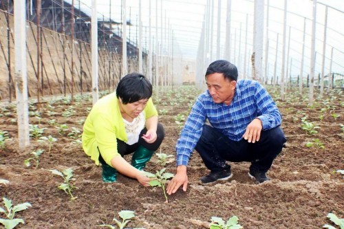 寿光纪台发布雨后大棚蔬菜紧急处理办法 增派专家保苗护苗