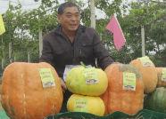 接地气儿!泰安农民刨地瓜、赛南瓜共庆首届农民丰收节