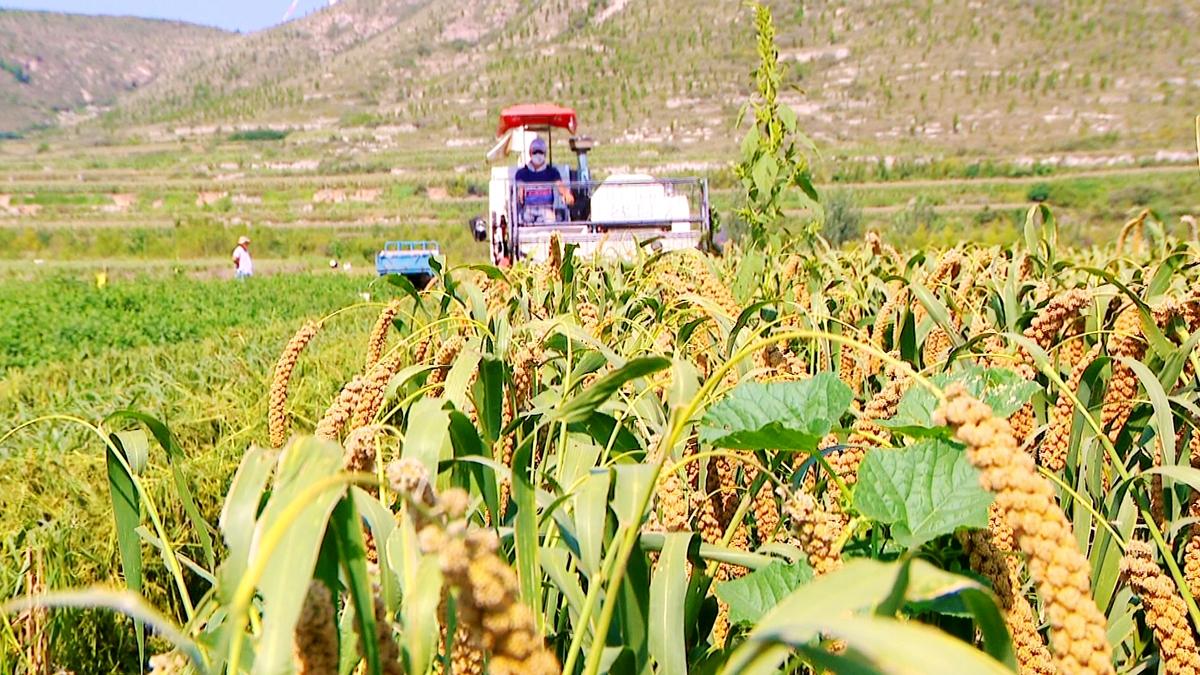 喜迎首个中国农民丰收节|五彩斑斓的幸福 五谷丰登的喜悦