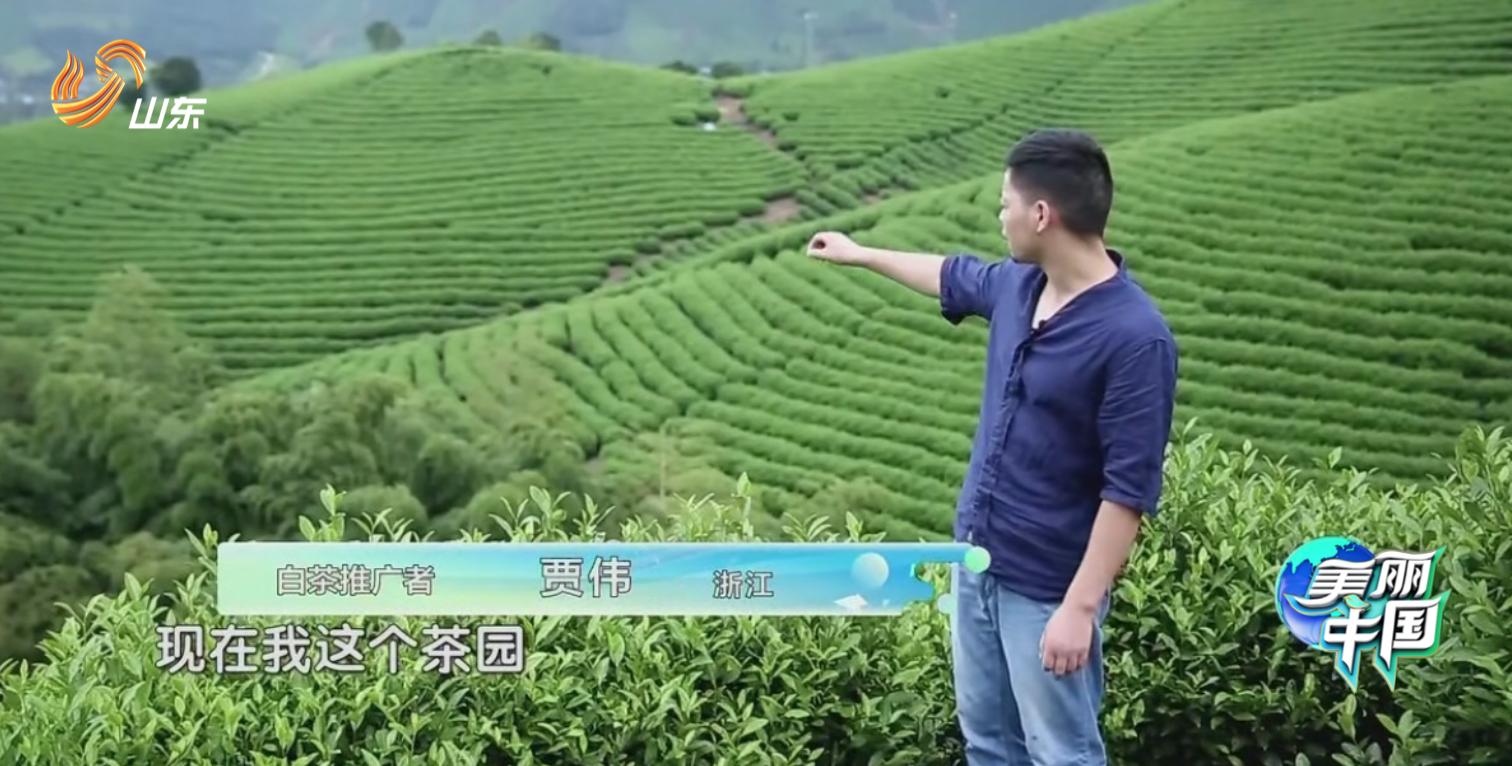 绿色发声人贾伟和他的茶园.png