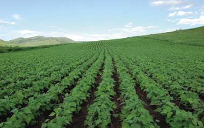 枣庄山亭3.75万亩大豆种植首次参保  每亩最高获赔230元