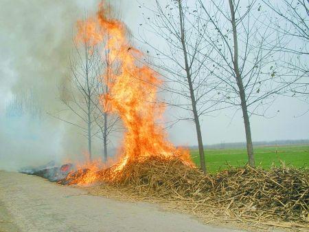 最高罚款2万元!莘县禁止露天焚烧秸秆、垃圾和露天烧烤
