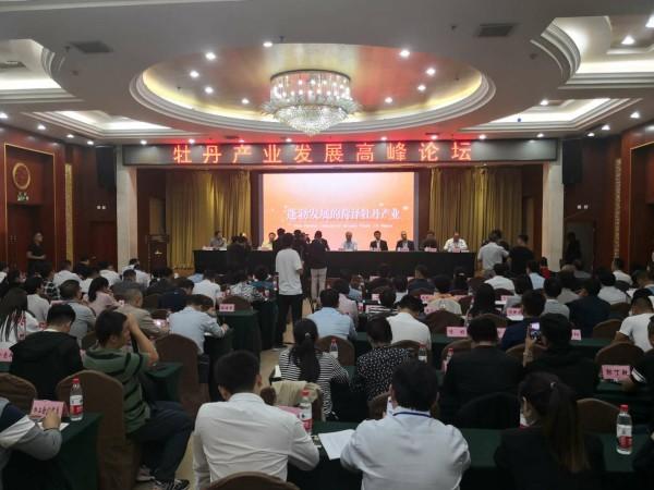 菏泽举办牡丹产业发展高峰论坛 特色产业应该也必须发展好