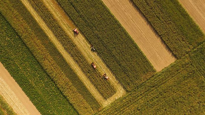 """22秒丨航拍玉米地里的""""国庆节"""":遍地金黄 诉说着丰收的故事"""