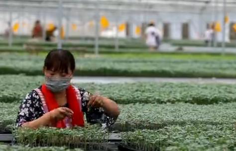 菏泽定陶整合扶贫资金 助力脱贫提升产业