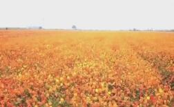 庆国庆 看美景丨金秋十月看秋日繁花,赏山河如画