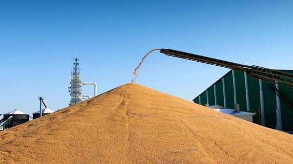 山东推进粮食企业信用体系建设 明年3月份开展全国政策性粮食库存大清查