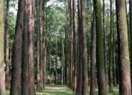 无棣公开处置新大济路东侧部分树木