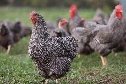 山东着力发展特色畜牧业 助力助力产业兴村富民乡村振兴