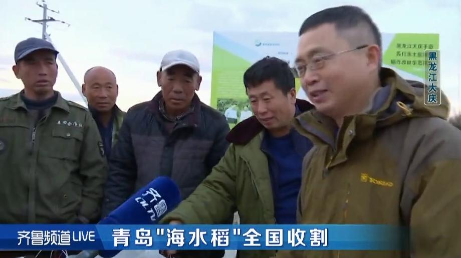 68秒丨黑龙江大庆海水稻平均亩产210.9公斤 耕农:盼改良后产量翻倍