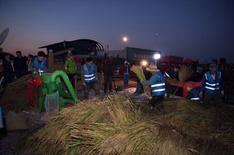 """青岛""""海水稻""""全国试种迎来大范围收割测评 测产结果揭晓"""