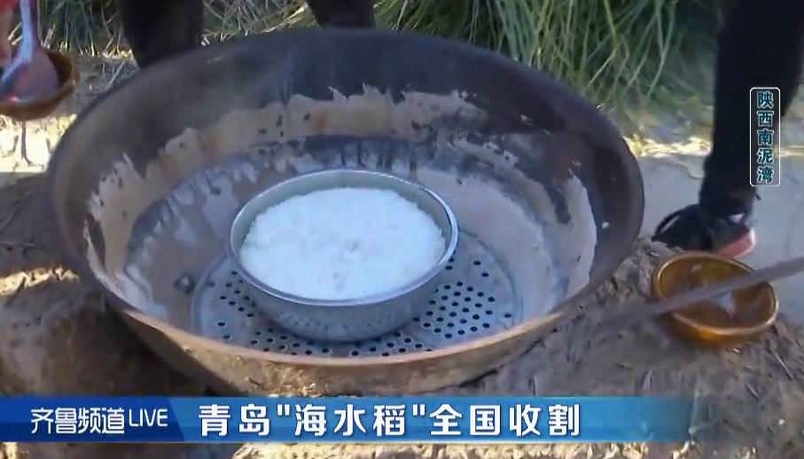"""124秒丨南泥湾收获的首批""""海水稻""""口感如何?听听专家怎么说"""