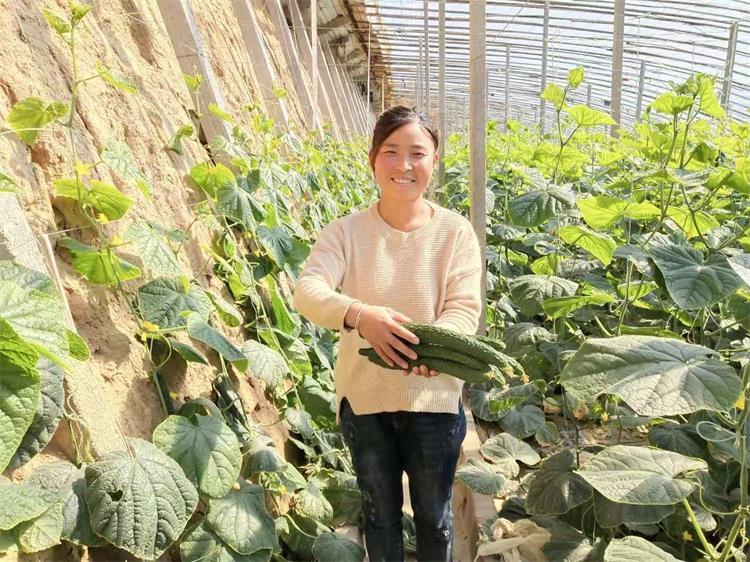 潍坊:灾后补种抢种蔬菜陆续上市 菜农喜迎秋收