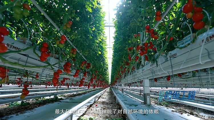 超级工程 | 沙漠、戈壁...智慧大棚让番茄在极限环境中生长成为可能