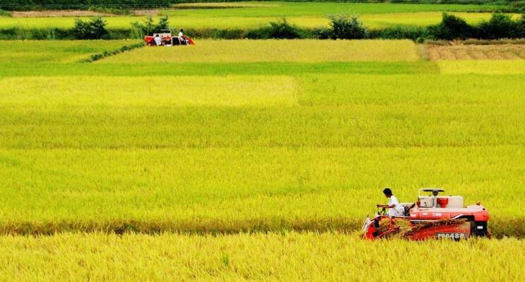 山东每天上阵农机150万台促三秋生产 多举措做好农机管理服务保障
