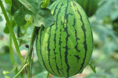 山东成立无公害农产品认定评审委员会