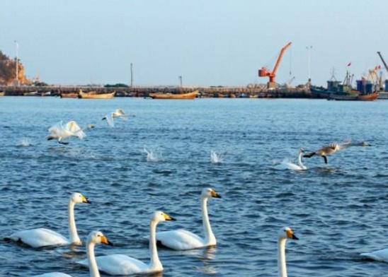 荣成今年首批渔民减船转产补助发放到位 压减渔船10艘