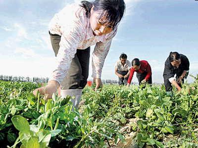枣庄山亭区农户获小麦农业保险理赔金83万余元