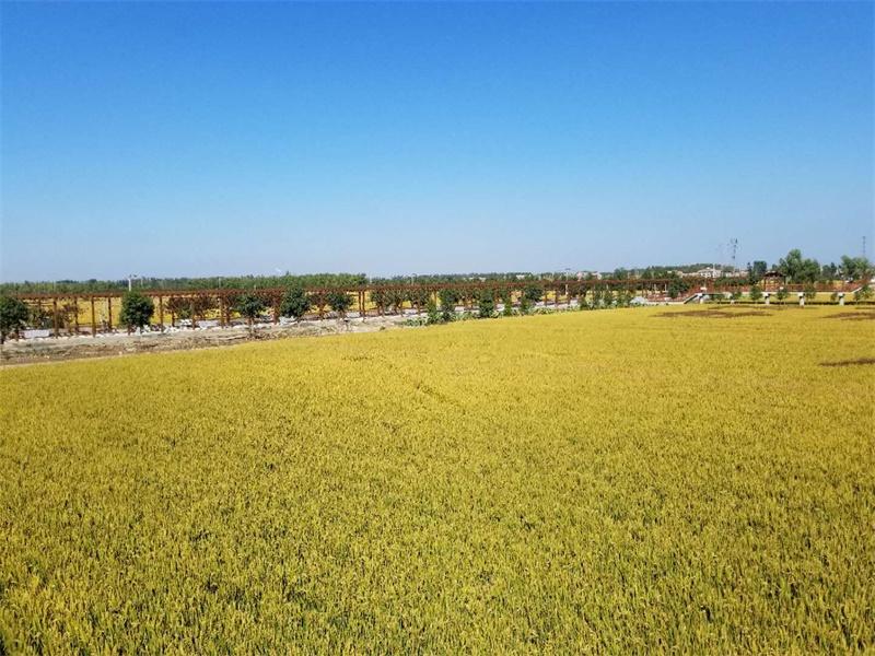 中国·鱼台优质稻米产业发展暨乡村振兴高层论坛举行