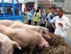 山东发文要求进一步做好非洲猪瘟防控 加快建设87处检查站