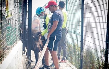 厄瓜多尔遭遇森林火灾烟雾弥漫 工作人员带动物大撤离