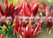 中国武城•英潮辣椒价格指数正式上线运行