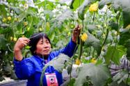 寿光入选全国农村一二三产业融合发展先导区创建公示名单