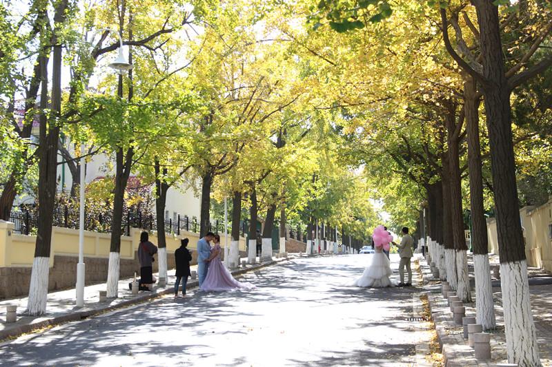 青岛八大关秋色正浓 赏秋正当时