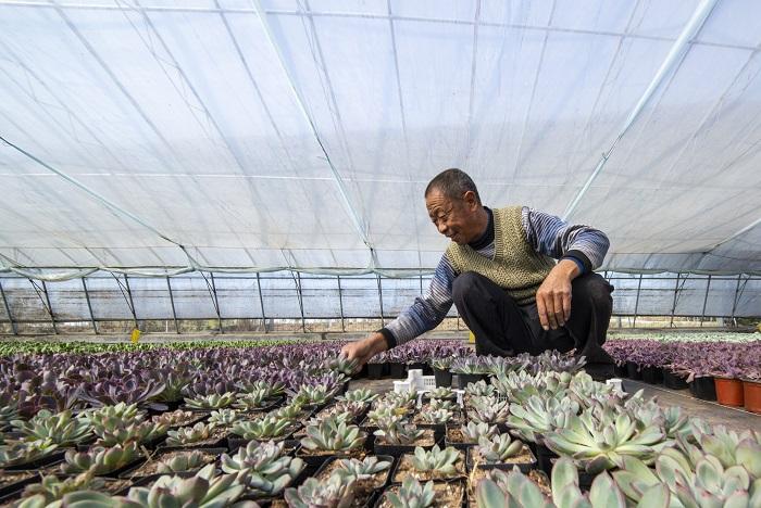 50秒丨武城有个花卉基地专种多肉 单个大棚年收益20万元