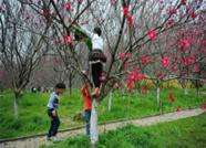 损坏花草树木违规!《泰安市城市绿化条例》11月1日起实施