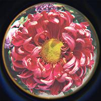 德州锦绣川秋季菊展盛大开放 5000余盆菊花等您观赏(图)