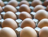 淄博发布一批食品安全抽检通告 鸡蛋中检出恩诺沙星成分