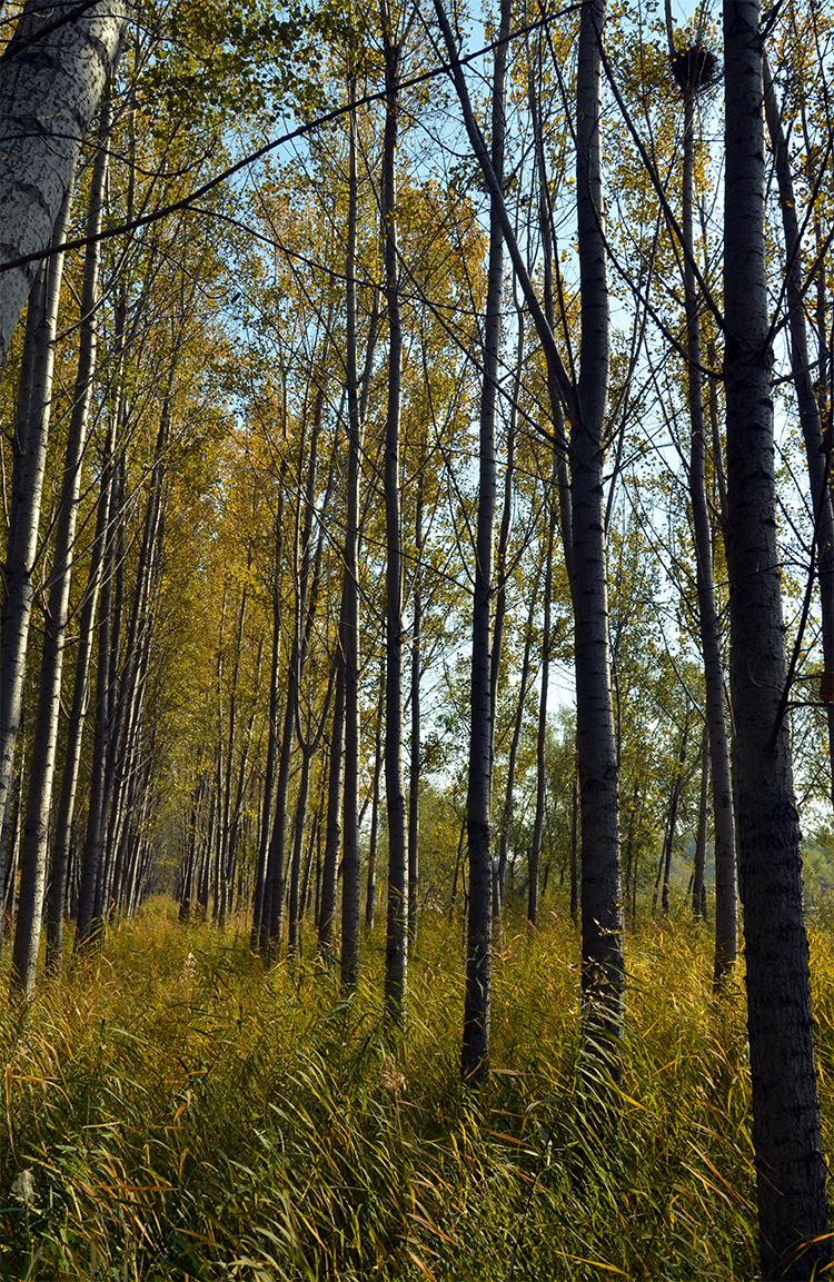 突出抓好绿色通道补建工程 德州秋冬季计划造林8万亩