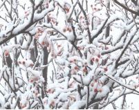 沂山迎来今冬第一场雪 到处银装素裹美不胜收