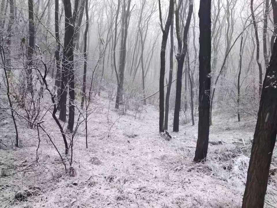 海丽气象吧|潍坊迎来今冬首场降雪 气温变化看这里