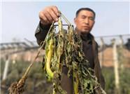 济阳曲堤镇一农户大棚失火损失15余万 警方已介入调查