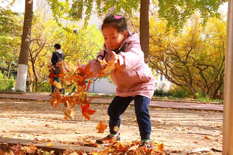 深秋时节山师枫叶落满园 趁着周末快来打卡拍照