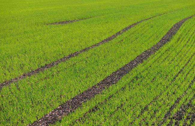 山东将开展耕地地力保护补贴面积核定工作专题调研