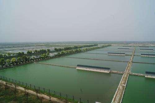 山东将开展2018年度省级水产原良种场复查工作
