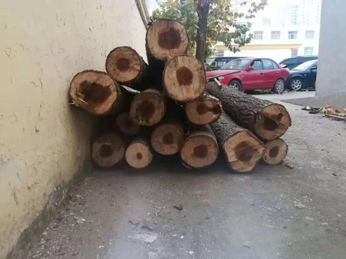 犯罪团伙流窜两省五地盗伐林木 疯狂作案50余起被抓获