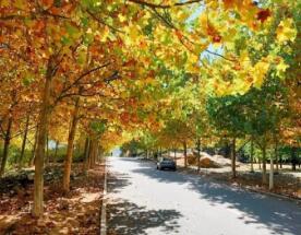 冬日校园,带你走一走最美上学路,一览明媚的色彩