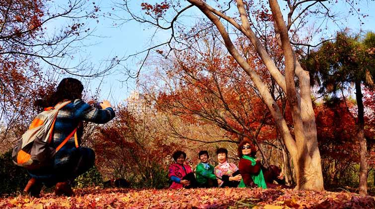 再不去看要等明年!济南泉城公园枫叶满铺美如画