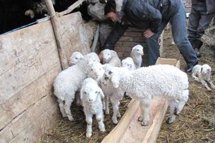 违规向贫困户收取扶贫羊押金 聊城东昌府区一村干部被处分