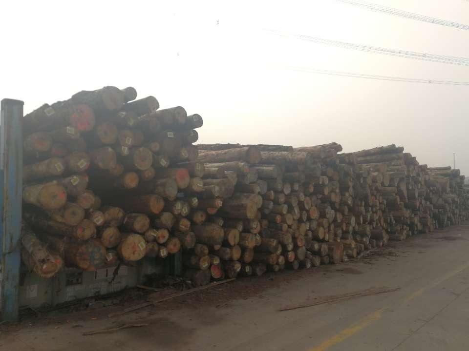 决胜执行难:黄岛法院查封被执行人涉案木材近两万立方
